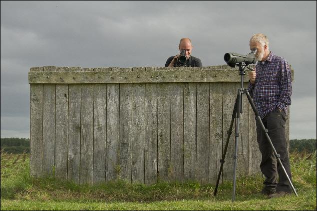 Excursie steltlopers en doortrekkers in het Lauwersmeer en de Ezumakeeg