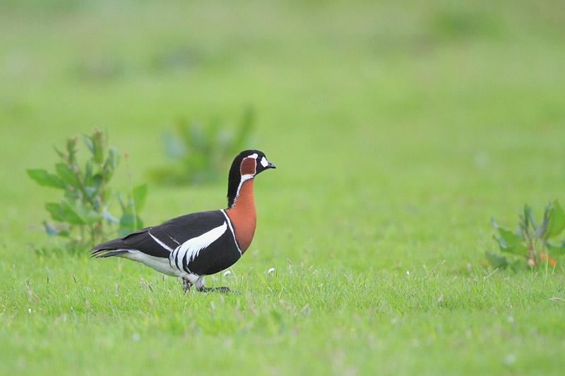 Wintervogelexcursie naar het Lauwersmeergebied